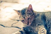 Abandoned cat with stress face vintage closeup poster