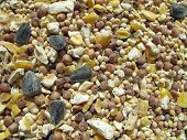closeup of nuts and seeds used in bird feeder poster