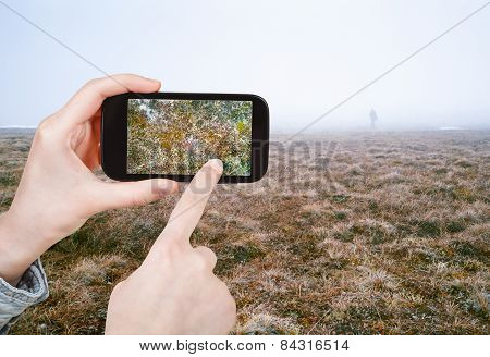 Tourist Taking Photo Of Arctic Tundra In Spring