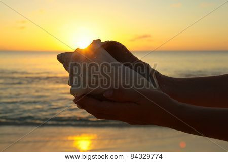 Sea Shell In Hands