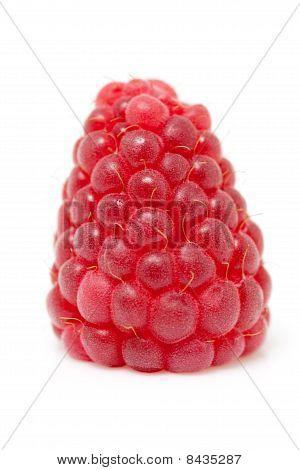 One Raspberry In  Closeup