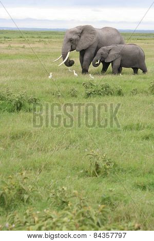 Mother and young elephant making their way across the open veld in Kenya.
