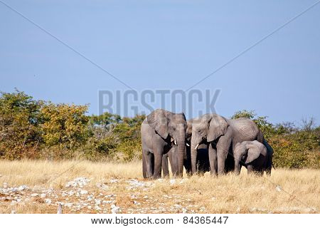 A group of Elephants standing around waiting for their turn at a water hole.