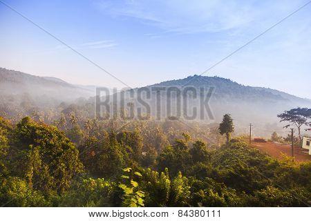 Sunrise in jungle