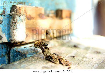 Bee_005