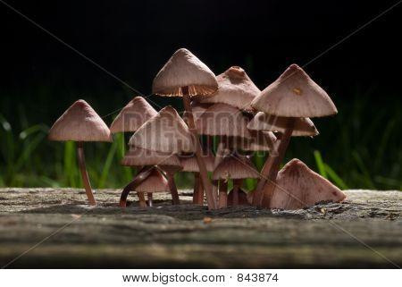 Backlighted Mushrooms