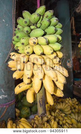 Fresh bananas ripening from green to yellow