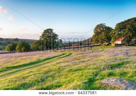 Summer Evening On Dartmoor