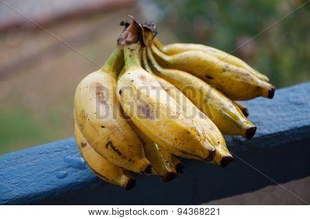 Lady Finger bananas