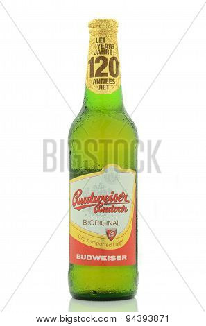 Budweiser lager beer isolated on white background.