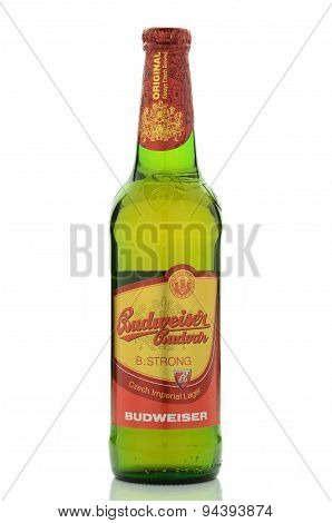 Budweiser strong lager beer isolated on white background