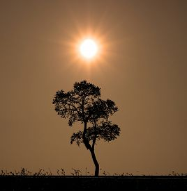 Silhouette Tree And Sunset