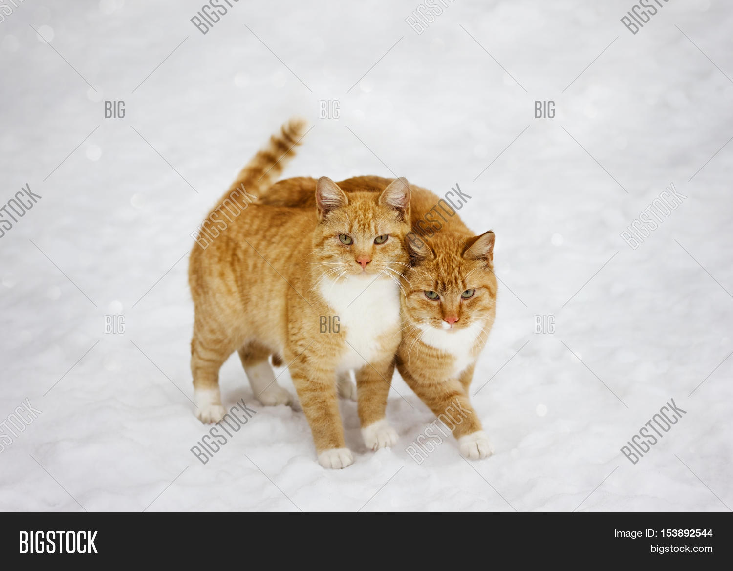 two cats nestled each other outdoor image photo bigstock. Black Bedroom Furniture Sets. Home Design Ideas