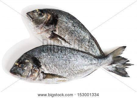 Top view of two fresh dorado fishes (Sparus aurata L.) isolated on white background.