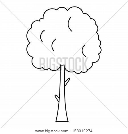 Tree with spherical crown icon. Outline illustration of tree with spherical crown with a rounded crown vector icon for web