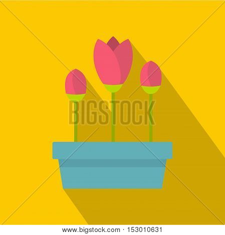 Pink tulips in planter icon. Flat illustration of tulips in planter vector icon for web isolated on yellow background