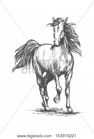 White horse running free gait. Wild mustang stallion walks against wind with waving mane and tail. Vector sketch portrait