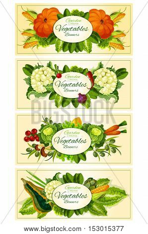 Farm and garden vegetables vector banners. Vegetarian vegetable products. Pumpkin and corn, cauliflower, radish, peper, onion and tomato, olives, carrot and cabbage, lemon and mushroom, leek and radish. Background for grocery store, food market