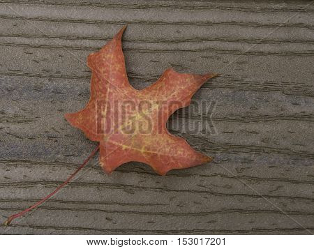 Red maple leaf on brown boards with stem on diagonal from lower left corner