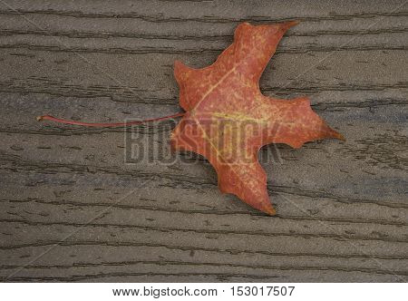 Single red maple leaf on brown boards with stem on the left center