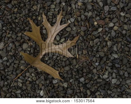 Single brown oak leaf on left side of frame on bed of gravel