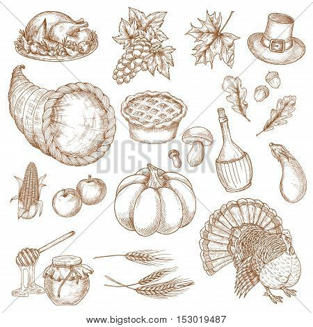 Thanksgiving day sketched symbols for greeting. Vector isolated traditional thanksgiving dinner turkey, cornucopia, pumpkin, vegetables harvest, grape bunch, corn, pilgrim hat. Decoration elements for thanksgiving cards, posters