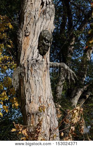 Homemade Halloween decoration of ghoulish tree with face and hands