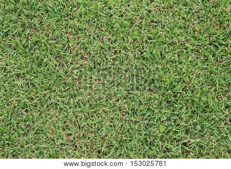 green grass texture in nature for background
