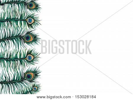 Colorful Frame with Watercolor Little Emerald Peacock Feathers