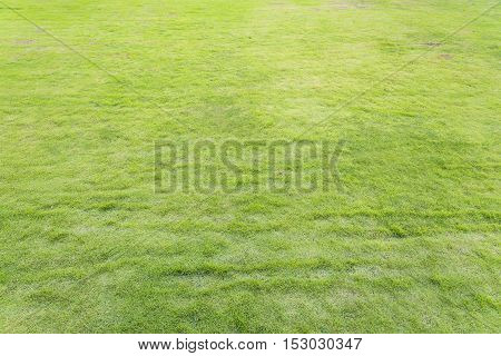 green grass yard / playground background and texture