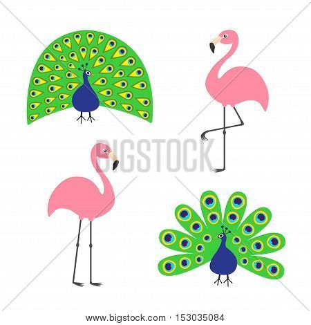 Peacock Pink flamingo set. Feather out open tail. Exotic tropical bird. Zoo animal collection. Cute cartoon character. Decoration element. Flat design. White background. Isolated Vector illustration