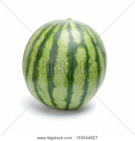 Single Green Striped Watermelon
