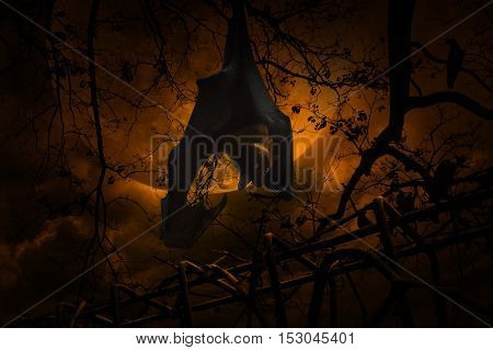 Bat scream and hang on dead tree over old fence crow moon and cloudy sky Spooky background Halloween concept