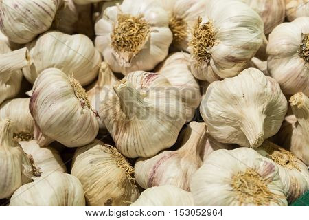 Common Garlic Allium Garlic Allium sativum L. garlic head garlic in a crate Garlic Fresh garlic Garlic group