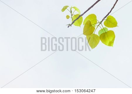 green leaves In spring or background .Green Energy.