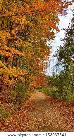 Beautiful and colourful path in an autumn forest.