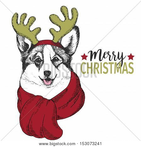 Vector portrait of Christmas dog. Welsh corgi dog wearing deer horn rim and scarf. Use for Christmas poster flyer greeting card holiday celebration party pet shop shelter pharmacy decoration.