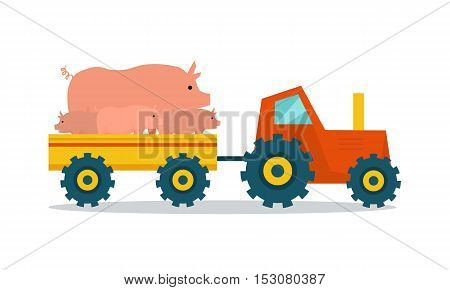 Domestic animals transportation vector. Flat design. Tractor with trailer caring pigs. Cattle mowing on farm illustration. Farming concept for meat, agricultural, transport companies. On white.