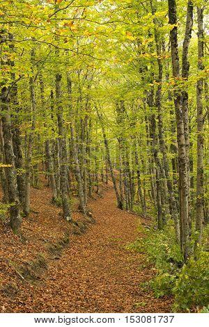 Tejera Negra Beech Forest Nature Park. Guadalajara Spain