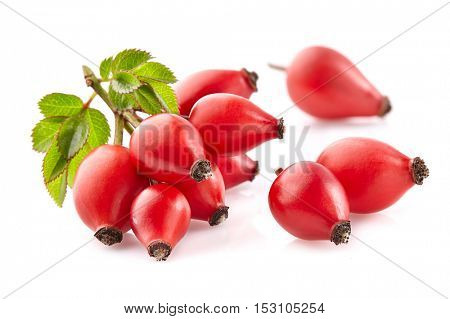 Rose hip with leaves