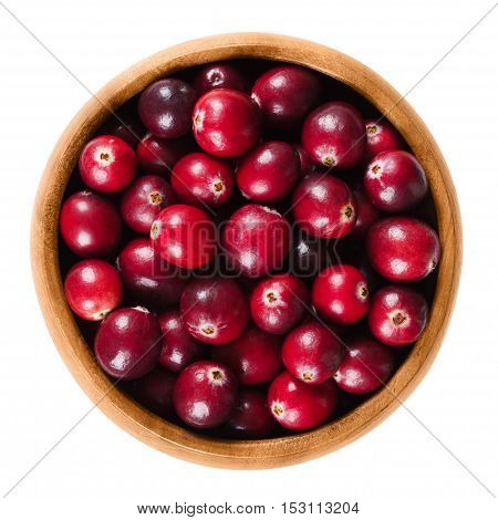 Fresh cranberries in a wooden bowl on white background. Ripe berries of Vaccinium macrocarpon, also large cranberry, American cranberry or bearberry. Isolated macro food photo close up from above.