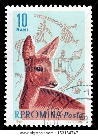 ROMANIA - CIRCA 1961 : Cancelled postage stamp printed by Romania, that shows Roe Deer.