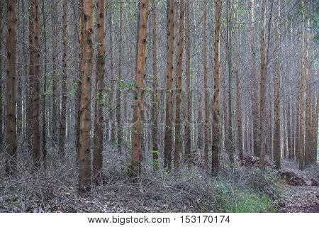 Tree background environment nature plant outdoor background