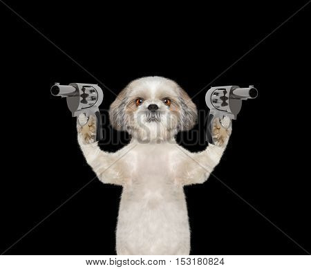 Dog with guns is murderer - isolated on black