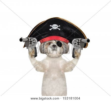 dog in a pirate costume with guns -- isolated on white