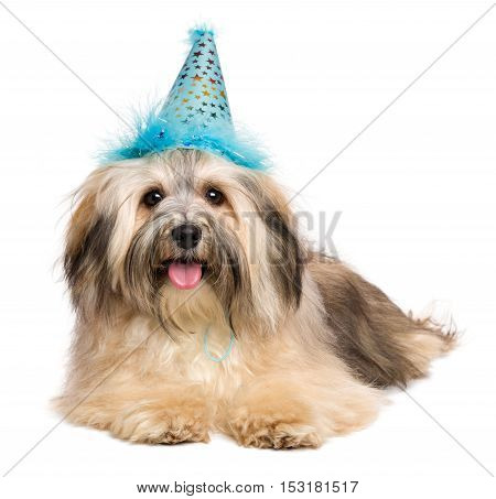 Cute happy Bichon Havanese puppy dog in a blue party hat is lying and looking at camera - isolated on white background