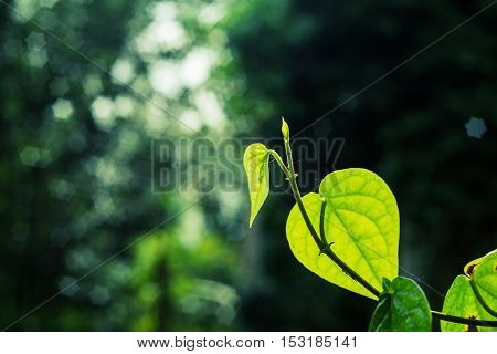 Go green concept, Vintage landscape nature leaf background, Green leaf with nature bokeh star shape on blurred dark background