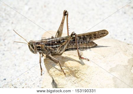 That is a grasshopper on a stone in the Florida sun.