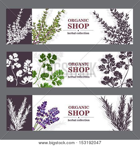 Herbal cards with herbal spices and fragrant lavender on sepia horizontal background vector illustration