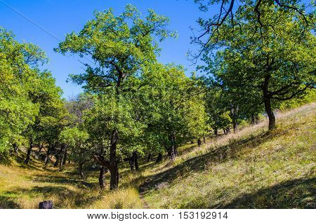 Trees early autumn day on rough terrain.